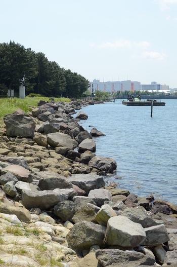 東京で一番猫が多い公園として人気の大井ふ頭中央海浜公園。野球場やテニスコート、陸上競技場などがあるとても広く大きな公園です。アクセスはJR品川駅、大井町駅、大森駅からバスか、東京モノレール大井競馬場駅から徒歩8分ほどとなります。