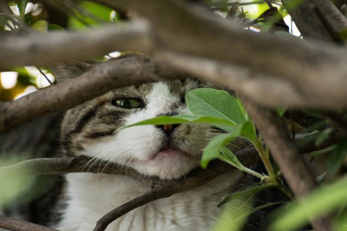 普段はのどかなお散歩を楽しんでいる猫たちですが、スポーツイベントなどが開催されるときは人が非常に多くなるので、人目につかないところに隠れてしまうこともあります。猫に会いに行くときには、事前にスポーツイベント情報などをチェックしておくといいかもしれません。