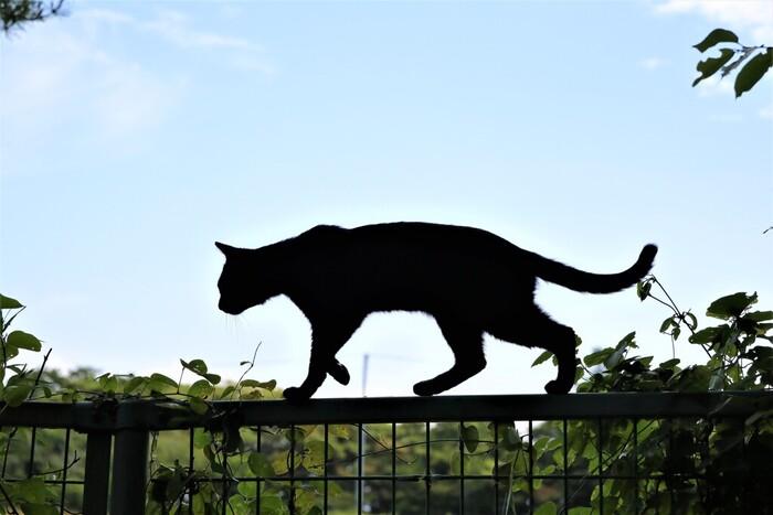 田代島には大泊港と仁斗田港という二つの港があり、猫たちにも港の周辺で多く出会うことができます。漁師さんたちがお魚を猫たちにあげることも多いそう。フレッシュなお魚をもらったら、猫たちも大喜びですね。
