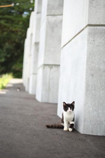田代島の日常には猫がつきもの。ソロ活動している猫もいますが、何匹かで一緒に寛いでいる姿も見ることができます。出会った猫たちをカメラにおさめたら、素敵な猫写真集ができそうです。
