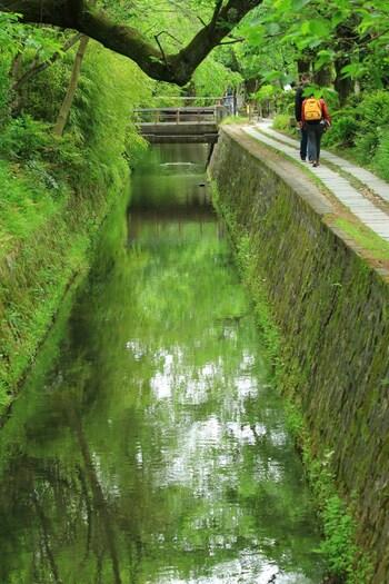 哲学の道は、京都の左京区、若王神社から銀閣寺までの約1.5キロほどの小路です。哲学者、西田幾太郎が思索にふけったということからその名がついたとされています。この哲学の道の若王神社の近くが猫スポットといわれ、たくさんの猫たちが集う場所になっています。