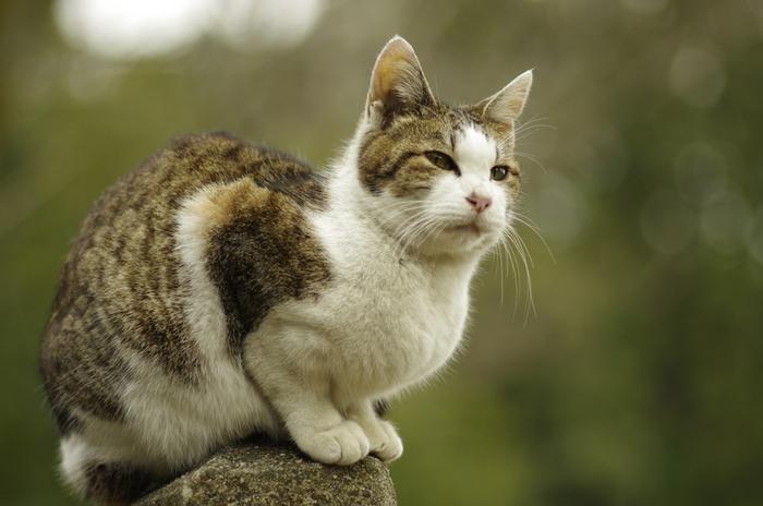 ここの猫たちは人懐こい猫が多く、自分から寄ってきてくれる子も!毛の艶もよく、太っている子も多いので、地元の人たちに大切に愛されているのがよく分かります。