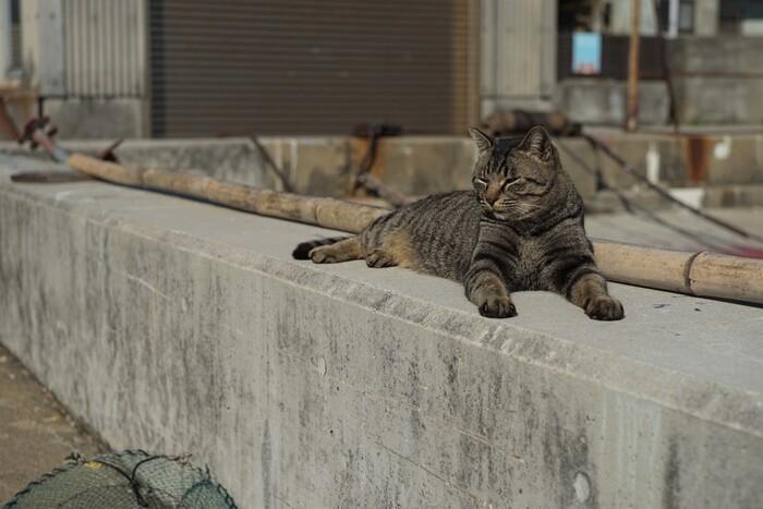 のんびりと日向ぼっこする猫のなんともいえない表情に、心がふと軽くなるのを感じます。猫の見つめる先には何があるのか、知りたくなりますね。
