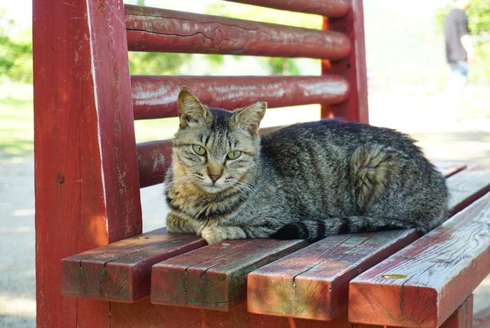 地元や観光客に愛されている猫たちは、穏やかで人懐こい子が多いんです。猫じゃらしなどを持参すると、一緒に遊んでくれる猫もいます。遊んでいるときと、クールな表情のとき、どちらの表情の猫もとてもカワイイものですよね。