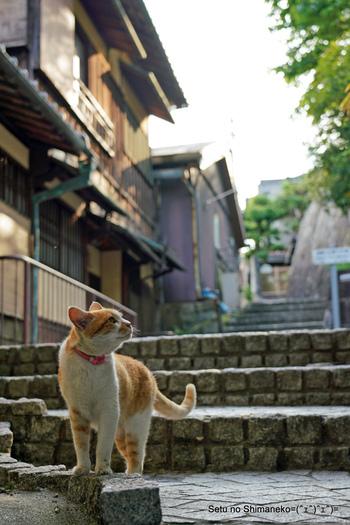細い路地をお散歩する猫をパチリ。動きのある写真は、その場の空気感までも包み込んでくれます。猫との一期一会を大切にしたくなりますよ。