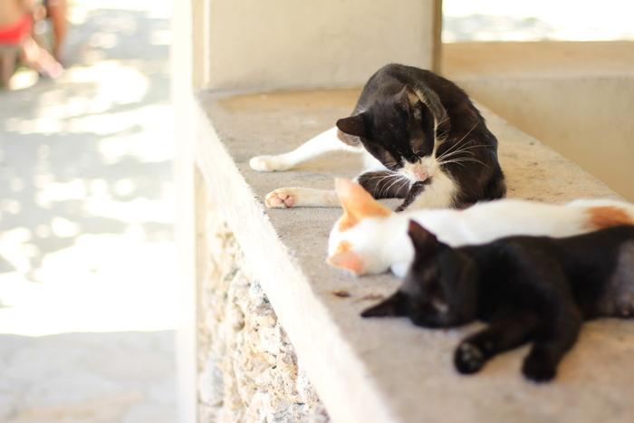 コンドイビーチの猫たちは何匹も一緒になって寛いでいることがあり、集団の可愛らしさを堪能することができます。暑さの中でまったりと過ごす猫たちを見ると、こちらまでほっこりとした気持ちになれますよ。