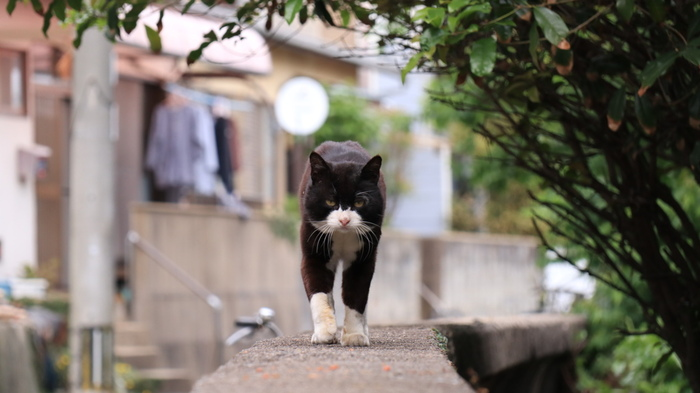 なんとアメリカのCNNが選ぶ「世界6大猫スポット」にも選出され、ますます有名になりました。ここの猫たちは人のことをあまり警戒せず、とても人に慣れています。