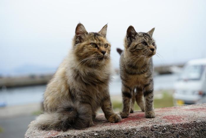 福岡県糟屋郡新宮町、玄界灘に浮かぶ相島。新宮港から相島までわずか17分の船旅で行ける猫のパラダイスです。もともとは釣り人たちに人気のスポットでしたが、たくさんの猫が自由気ままに暮らすことが知られるようになり、猫好きの人たちが訪れるようになりました。