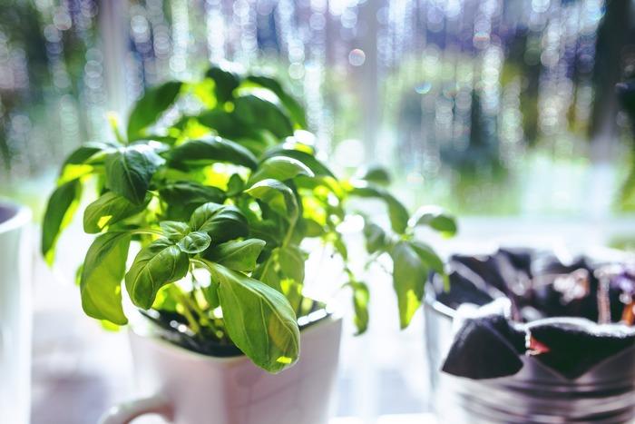 すでに実践している方も多いと思いますが、ハーブを自分で育ててみるのもいいですよね。お家に緑が増えるだけでなく、料理にも使えて一石二鳥です。
