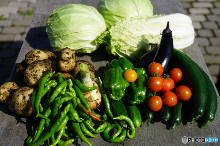 せっかく美味しい食材を手に入れても保存方法が悪いと味も落ちてしまいます。食材を買ってきてそのまま冷蔵庫に保存する前に、食材の保存方法をおさえておきましょう。主に土の下に生える芋類や大根などの野菜は冷暗所、葉物は新聞紙などで包んで野菜室へ。キャベツやトマトなど、切った後保存する場合は、切り口をしっかりラップしてから保存袋に入れて野菜室で保存するようにします。せっかくの野菜、しっかり保存して美味しくいただきたいですね。