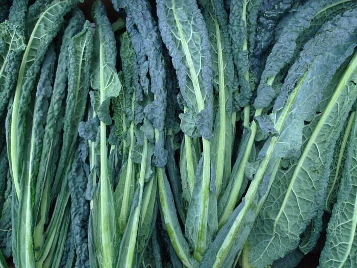 別名カーボロネロと呼ばれている「黒キャベツ」は、イタリアをはじめとするヨーロッパ地方でよく食されている野菜です。普段私たちが目にするキャベツのように丸くならないのが特徴的で、葉もちりめんで風味も強く、煮込んだり火を通す料理におすすめです。
