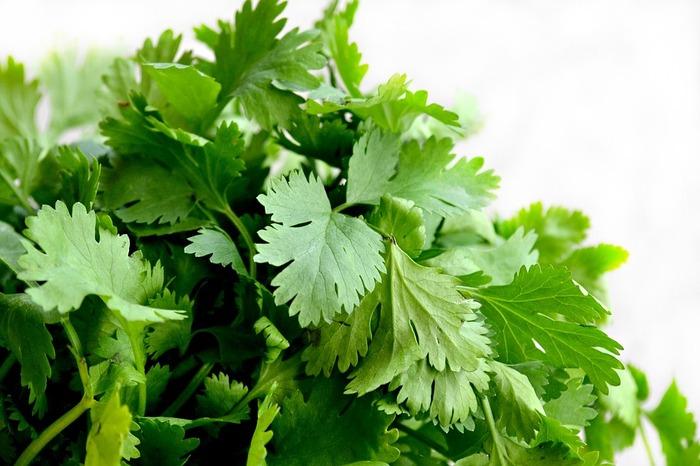 パクチー(別名:シャンツァイ、コリアンダー)は、セリ科のハーブで、独特の癖のある香りが特徴の葉っぱです。  もともと日本にはなかったハーブですが、昨今のエスニック料理ブームでパクチーを食す方が増加。 (筆者もパクチー苗を自宅で育てています)
