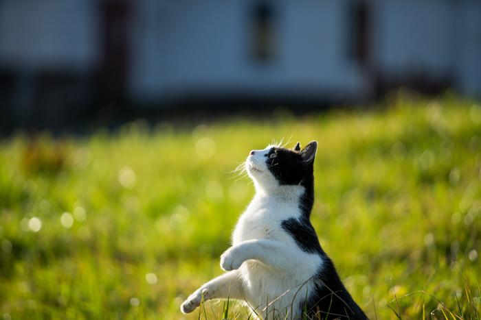 マイペースで自由気ままに過ごしている猫たち。階段でお昼寝したり、塀の上をお散歩したり、公園でちょうちょと戯れたり。その愛らしい行動は、いつまで見ていても飽きることがありません。