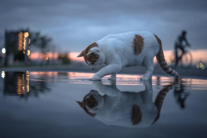 自分の気持ちに向き合って、やりたいことをやる。そんな当たり前のことを、私たちは忘れがちです。バイタリティ溢れる猫たちに会いに行くと、豊かな毎日を過ごすためにどうしたらいいか、ヒントをもらえるかもしれませんね。