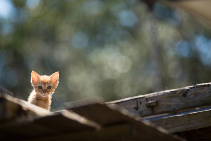 旅先で、自由気ままにふるまう猫たちに出会ったら、日常の小さな悩みなんて吹き飛んでしまいそう。猫たちとの一期一会の出会いを大切に、猫たちの生き方からプラスのパワーをもらってみましょう!きっと、また元気に頑張れるような気持ちが湧いてきますよ♪機会を見つけて、カワイイ猫たちに会いに行ってみてくださいね。