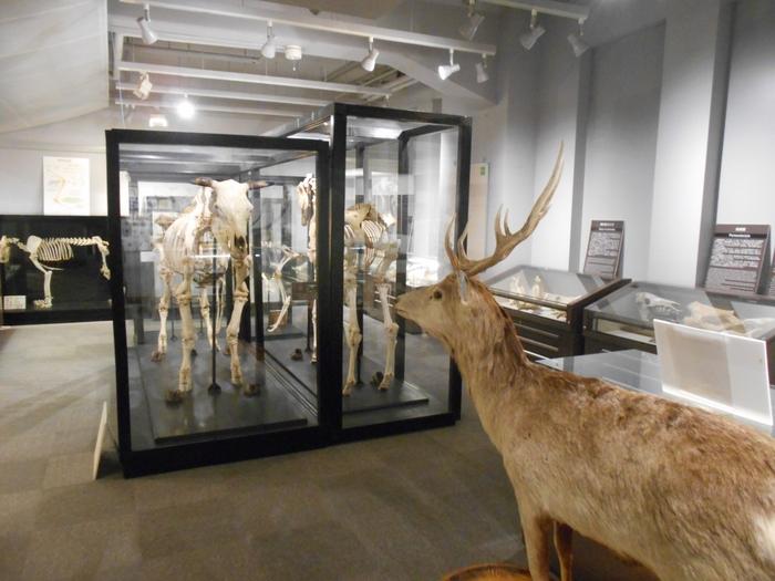 館内では、北海道大学の歴史展示、各学部による研究紹介、五感を使って楽しめるハンズオン展示、博物館の学術資料を紹介する「学術標本の世界」などが観賞できます。また、常設展示の他、企画展も開催。カフェやミュージアムショップもあり、ゆったりと楽しむことができます。