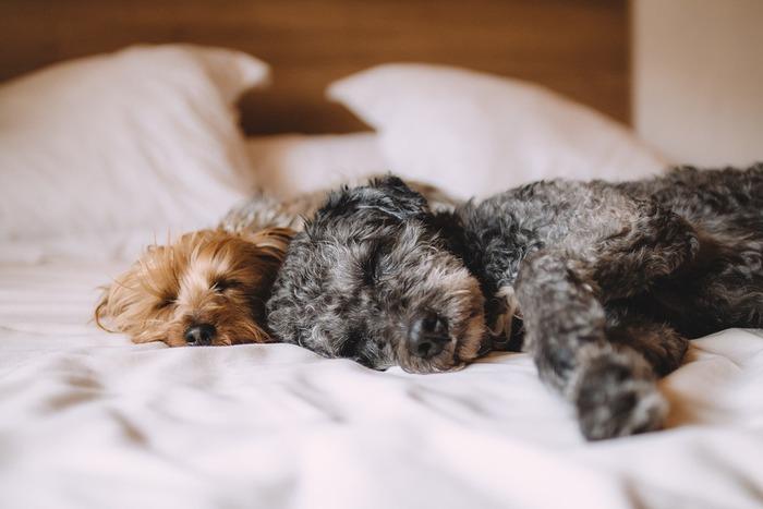 スヤスヤ眠るあなたの幸せそうな寝顔に、一日の疲れも吹き飛ぶ。幸せをありがとう。ペットという家族の一員との大切な時間を素敵に過ごしてくださいね!