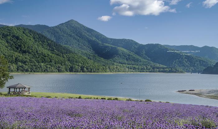 """観光地として人気の高い""""北海道""""。四季を通して様々な表情を見せてくれる大自然は、訪れた人々をその魅力の虜にしてしまいます。"""