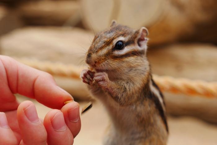リスの森飛騨山野草自然庭園を訪れるときは、ぜひリスの餌を購入されることをおすすめします。掌に餌を乗せていると、人によく馴れたリスたちが餌をおねだりするように近づいて来てくれますよ。