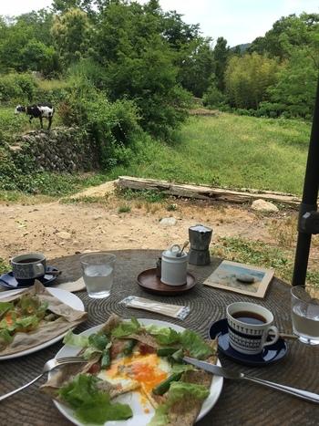 武州豚ショルダーハムやそば粉など、秩父特産の食材で作るガレットやクレープが人気です。お庭のヤギの様子を眺めながら、のんびりランチを楽しめますよ。