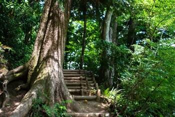 自然を散策しながらリフレッシュ♪関東のおすすめ「ハイキングスポット」5選