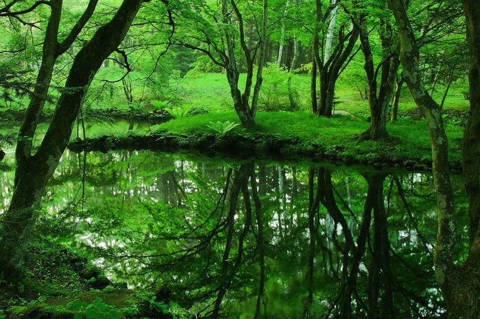 古くから避暑地や別荘地として愛され続けてきた軽井沢。静かな森や美しい滝など、豊かな自然に囲まれています。