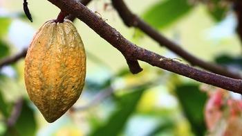 ココアは冬の飲み物のイメージがありますが、日焼けした時に摂取したい、抗酸化作用があると言われているポリフェノールを多く含んでいます。