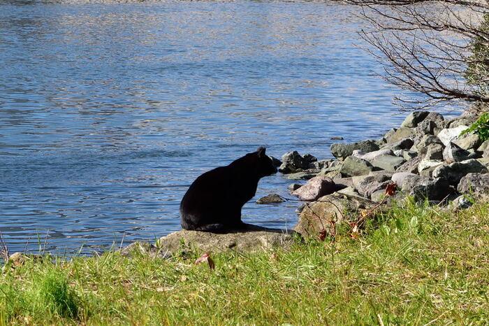 汐風を感じながらゆったりと寛ぐ猫たちと一緒に、水辺でひと休みしてみるのもいいですね。きらきらと光る水面を眺めていると、気持ちもふっと凪いできます。
