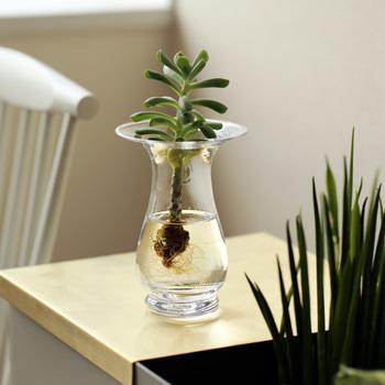 ヒヤシンスの球根を育てることができる、ガラス製のフラワーベースです。室内で水栽培をすると、鉢植えで育てるよりも早くヒヤシンスの花を楽しめるのが魅力。