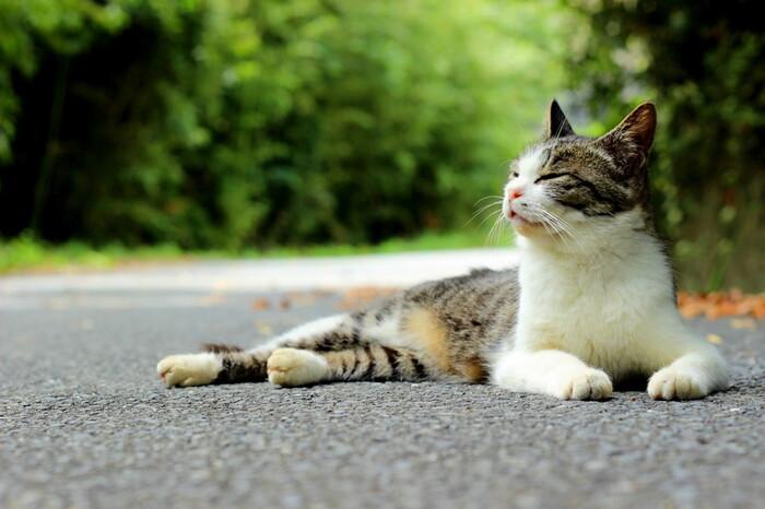 地元でお世話されている猫たちには、勝手にごはんやおやつはあげないように気を付けましょう。遊ぶときは、猫じゃらしなどのベーシックなおもちゃで遊ぶようにして、興奮させすぎないこと。みんなで猫を守っていくことが、猫の街を守ることにつながります。  それでは早速、「猫に会える街」と、立ち寄りたいおすすめのスポットも一緒にご紹介していきましょう。