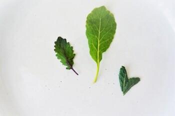 ケールの新芽をベビーケールと呼びます。やわらかく、クセが少ないので、ケール初心者さんでも気軽にチャレンジすることができます。サラダなどの生食に向いています。