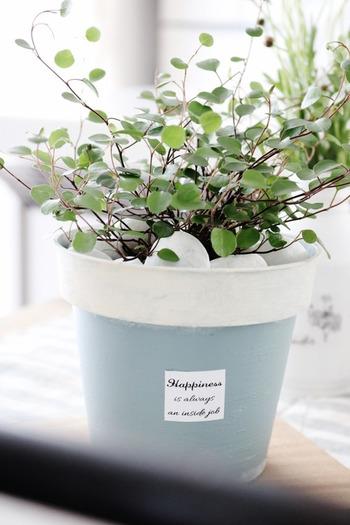 市販の植木鉢にペイントするのもおすすめです。素朴なテラコッタカラーのプランターポットも、2トーンのニュアンスカラーでペイントするだけで洗練された印象に。