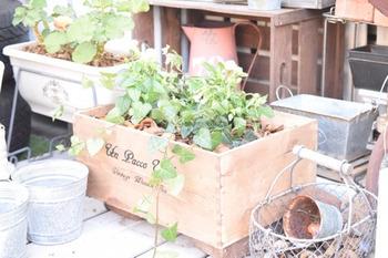 ワインなどの木箱にグリーンを植えて。そのままでもOKですが、オイルステインを塗ると味わいが増し、ヴィンテージライクな木箱になりますよ。