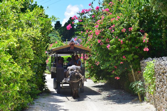 集落の中心部では、水牛車に乗って約30分の島内観光ができます。竹富島の歴史や島唄「安里屋ユンタ」の演奏を聴きながら、のんびり牛車に揺られるのも素晴らしい体験になりそうですね。また「竹富民芸館」では、ミンサー織や芭蕉布など島伝統の織物が無料で見学でき、機織の実演も行われています。沖縄の伝統に触れる体験を楽しむなら、竹富島がおすすめです。