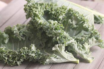 濃いグリーンの縮れた葉が特徴的なカーリーケール。苦みが少なく、細かくカールした葉がとても可愛いケールで、サラダにするとボリュームを出すことができ、葉物野菜のひとつとして使うと重宝します。