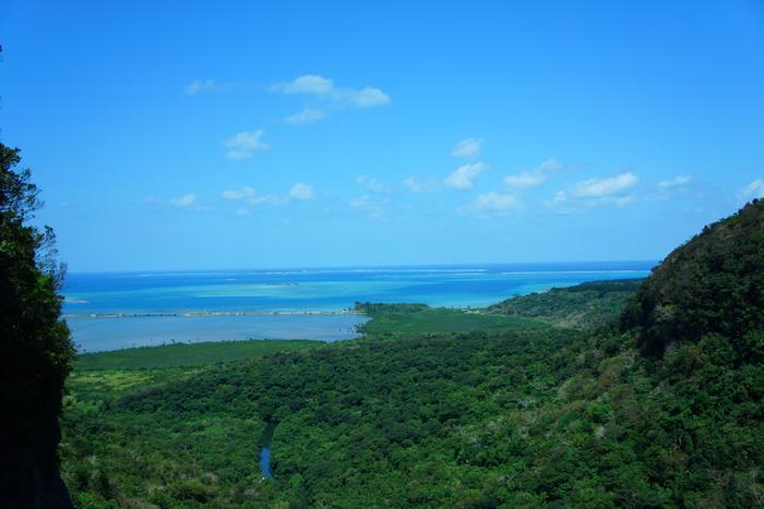 竹富島と並んでおすすめの離島は「西表島」。八重山諸島の中で最大の島で、石垣島からは高速船でおよそ40分。東洋のガラパゴスとも呼ばれ、原始の森が残る自然豊かな島です。土地のほとんどが亜熱帯ジャングルで、特に広大なマングローブ林はここでしか見ることのできない希少な景色。マングローブ林を船で巡るジャングルクルーズツアーが人気です。