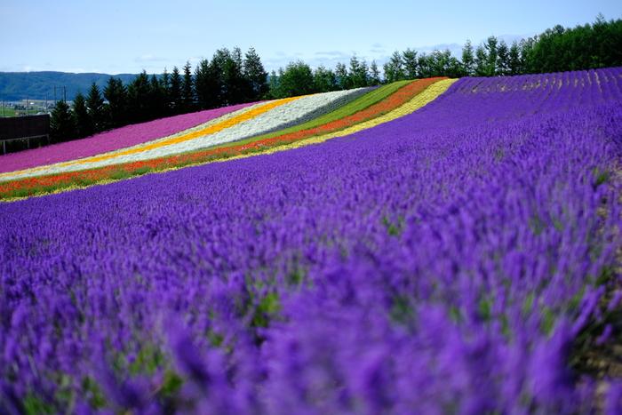 「北海道」で訪れたい。文化や芸術に触れられるアートなスポット【6選】