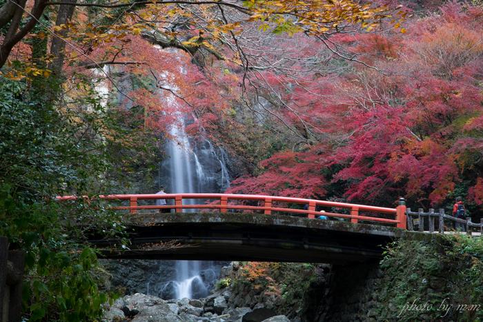 箕面公園の一部に属する箕面大滝は、「日本の滝100選」に選定されている落差33メートルの美しい滝です。深紅に染まったモミジ、白い水瀑、朱色の欄干をした太鼓橋が織りなす景色は絵画のような素晴らしさです。