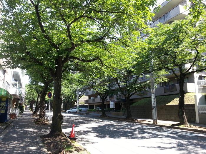 駅から続く桜の並木道を上って自転車屋さんの角を左に曲がり…駅から5~6分で到着。
