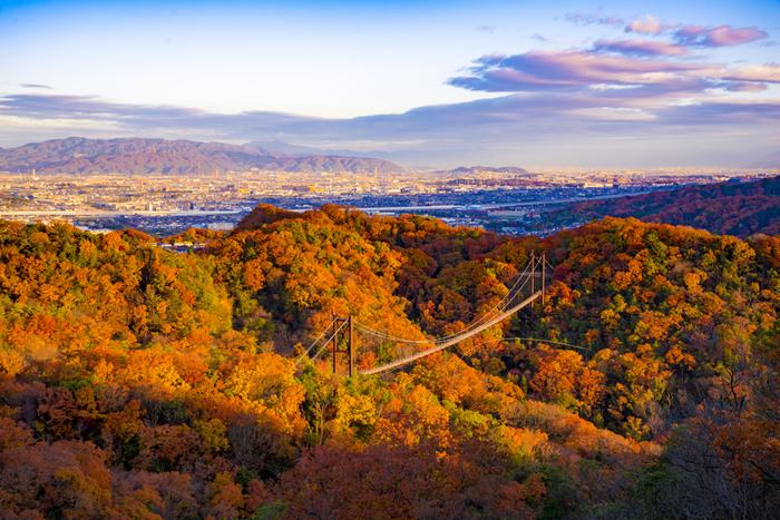 展望スポットからの眺めの美しさは傑出しています。赤、黄色、オレンジ色に彩った鮮やかな樹々、遠くに見える北摂連山と京都市街地が織りなす景色は、一枚の錦絵のような素晴らしさです。