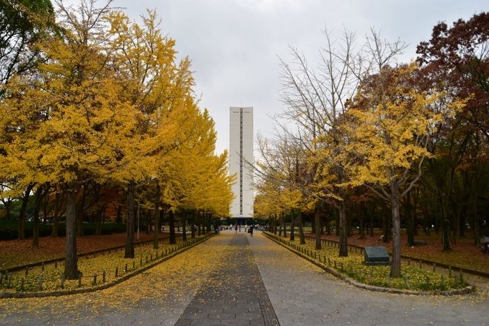 日本一の面積を誇る古墳、仁徳天皇陵の南側に位置する大仙公園は、敷地面積約81ヘクタールにおよぶ都市公園です。