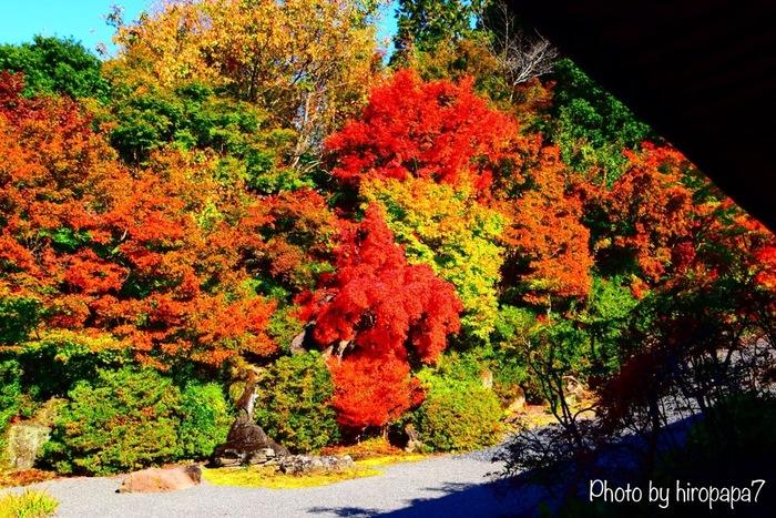 閑静な佇まいをした弘川寺は、桜をはじめ、花の名所としてもよく知られています。四季折々で美しい風景を見せてくれる弘川寺ですが、晩秋は隠れた紅葉の名所として知られています。鮮やかに彩った境内に植樹された落葉樹の樹々を眺めながら、かつて西行法師が詠んだ句(※)に想いを馳せながら、弘川寺で紅葉鑑賞してみるのもおすすめです。   ※西行法師は、かつて「願はくは、花の下にて春死なん そのきさらぎの 望月のころ」と詠い、その願い通りに弘川寺で享年73の生涯を閉じました。