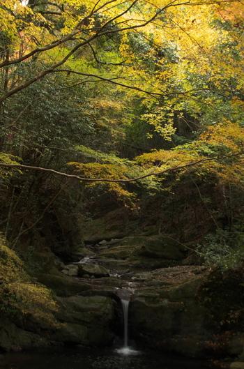 犬鳴川渓谷沿いには、七飛瀑(両界の滝、塔の滝、弁天の滝、布引の滝、古津喜の滝、千寿の滝、行者の滝)に代表される滝が多数あり、その数は48におよびます。ここちよい滝音に耳を澄ませながら、犬鳴山の鮮やかな紅葉を眺めながら、ハイキング気分を味わう楽しさは格別です。
