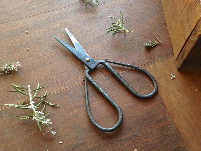 植えた後に、最初の剪定をします。生長を促すためには、思い切って少し枝葉が寂しくなるくらいに剪定してしまうことが大切です。