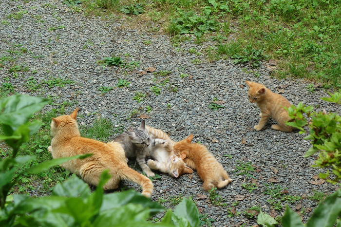 お庭には猫もいるんですよ。愛らしい姿を楽しみに訪れるファンも多いんだとか。