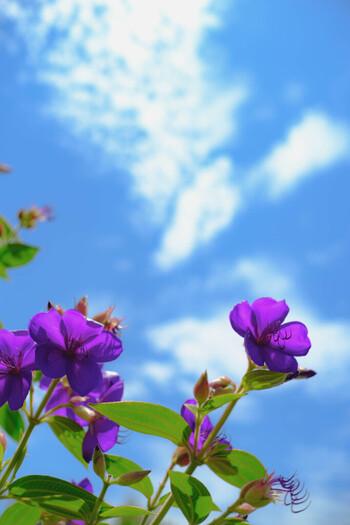 暑い夏でもお花を楽しみたい!でも、特に切り花は寿命が気になりますよね。特に日中お留守にするお家では、冬よりもどうしても寿命が短くなってしまいます。それでもせっかくキレイなお花、少しでも長持ちさせるコツを覚えておきましょう。
