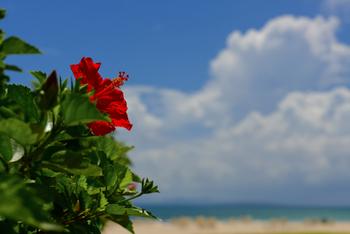 海にプールにお祭り・フェスなどなど・・・楽しいイベントがめじろ押しの夏、満喫できていますか? 一度きりしかない今年の夏を最後までエンジョイしたいですね!