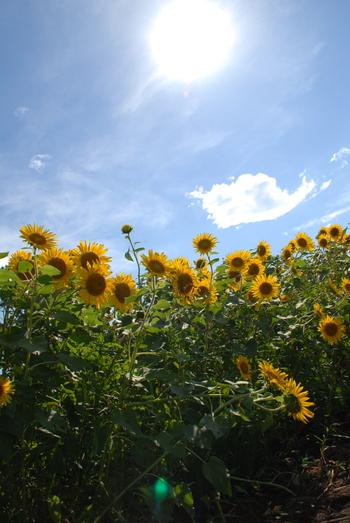 でも、楽しいことばかりではない夏。  じりじりと肌を焦がす紫外線・高い気温に大量の汗・クーラーの効いた室内との寒暖差などお肌へのストレスが多い季節でもあります。  夏のお肌ケアをしっかりしておかないと、秋には「夏疲れ」によってちょっと残念なお肌になってしまいます。  とくに紫外線ダメージをほおっておくと、いや~なシミやシワの原因にも…