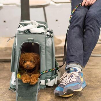 避難時の実用性を重視するなら、さらに多機能なペットキャリーもおすすめ。こちらのリュック型キャリーは、背面部分に大きな秘密があるんです。