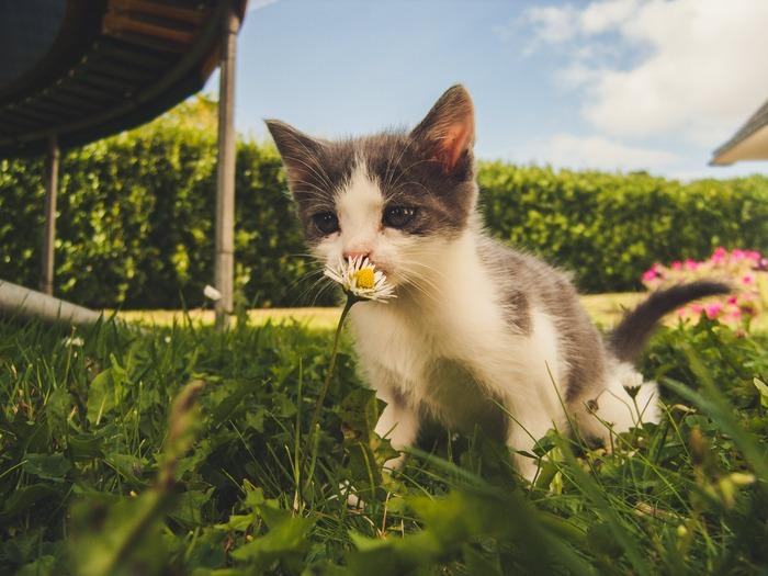 軽やかでキャッチ―なメロディーとは対照的に愛を唄った重めな歌詞に心惹かれます。夏を唄った曲ではありませんが、ナカシマさんのリラックス感のあるハイトーンボイスが耳に心地良く、夏の匂いを感じられる曲です。メンバーが海の前で演奏、女性と猫が主役のMVもほのぼのとして魅力的。
